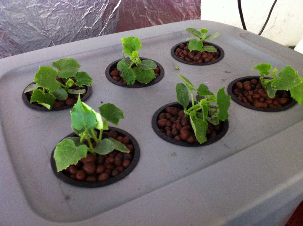 [MakerBay Central] Introduction to Hydroponics - Families