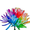20 Rainbow Chrysanthemum Flower Seeds