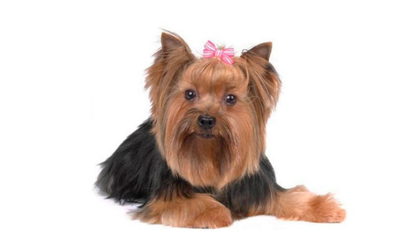 Dog Hair Bows in Assorted Patterns (5-Pack)