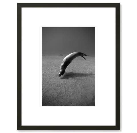 Wayne Levin – Hawaiian Monk Seal 2