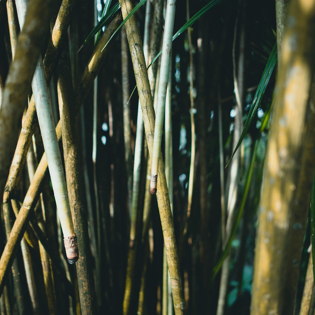 The story behind the Bamboo designs