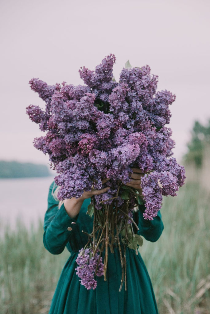 Lilac flowers | Shop Cape Town florist