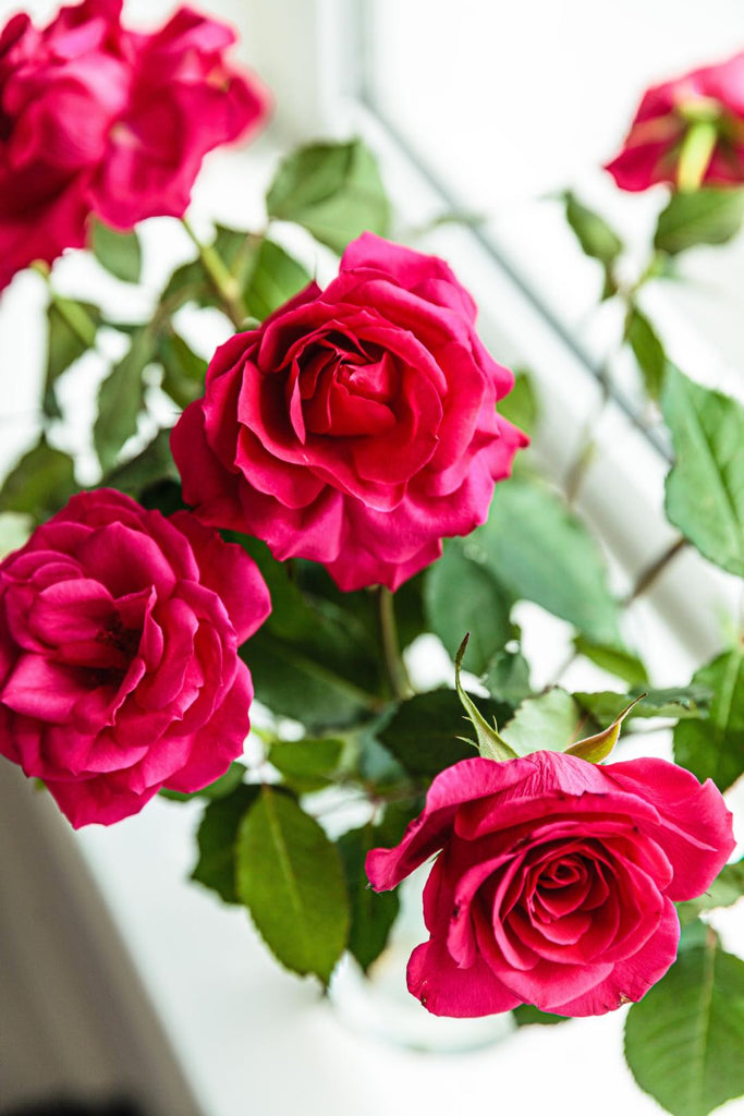 Fresh edible roses | Shop Fabulous Cape Town flower delivery