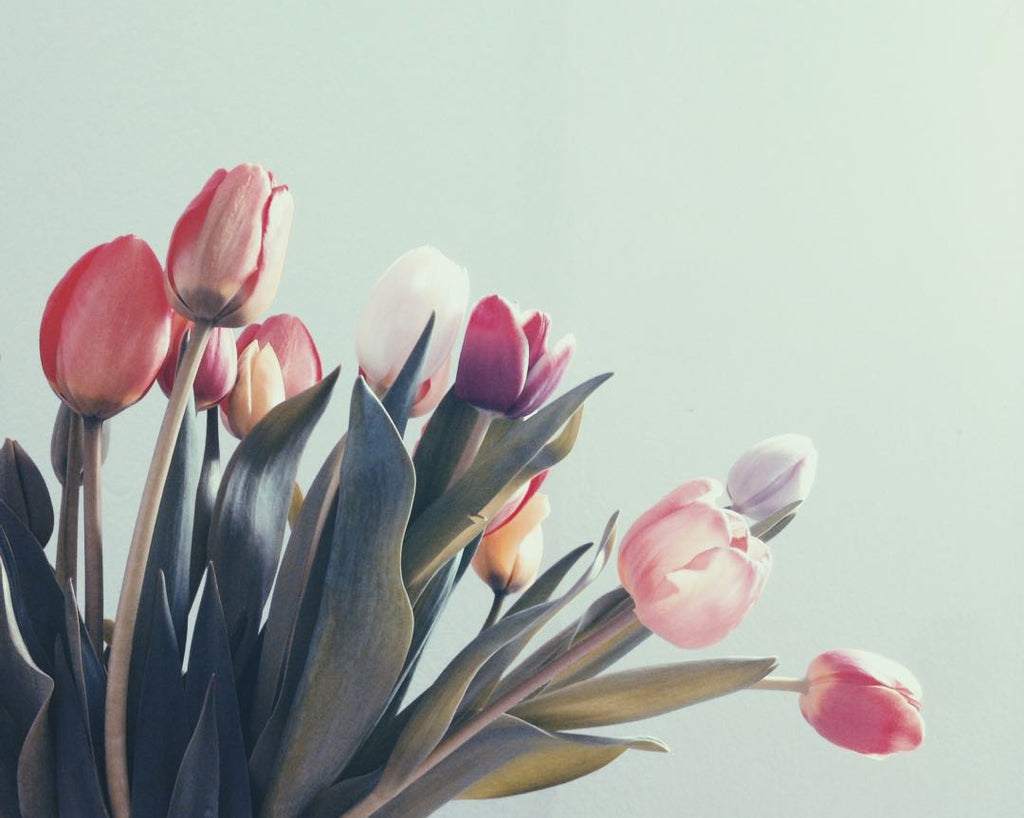 Tulips | Shop Fabulous Flowers Cape Town florist