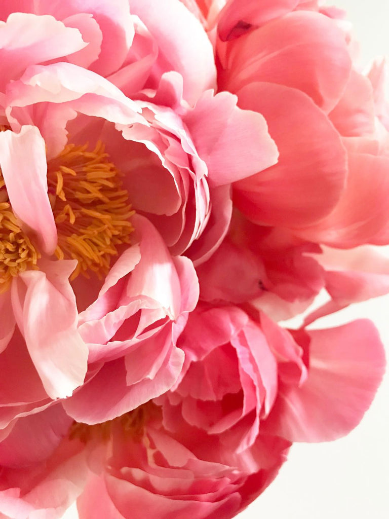 Peonies and peony flower Cape Town | Shop Fabulous Flowers