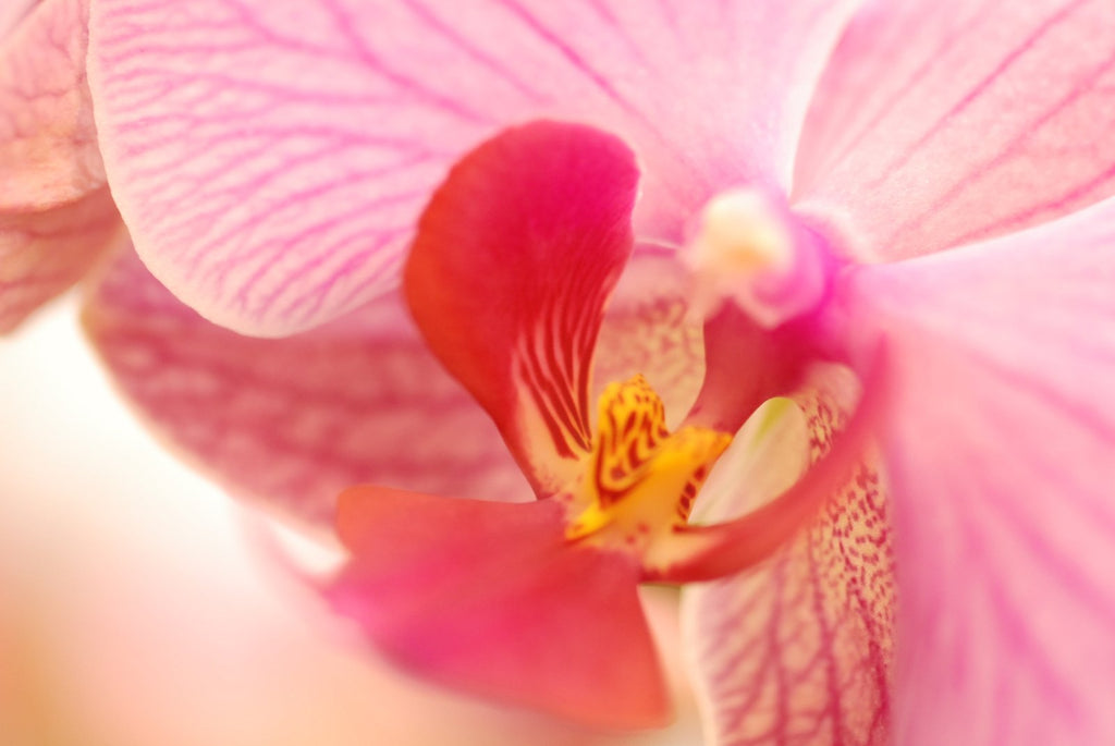 Buy Orchids in Cape Town Shop Fabulous Flowers and Gifts