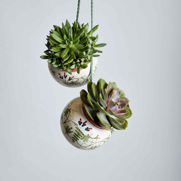 Succulents Just Hanging Out | Fabulous Flowers