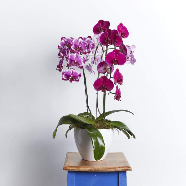Plants - Gorgeous And Graceful Orchids