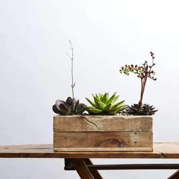 Three Succulents - Fabulous Flowers Cape Town Flower Delivery