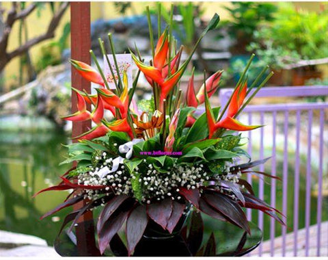 Bright Arrangement    - TBF4077