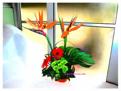 Bird of Paradise Arrangement   - TBF4063