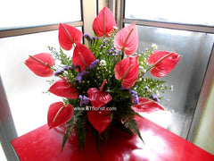 Anthurium Arrangement  - TBF4027