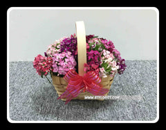 Sweet William Basket  - FLB5624