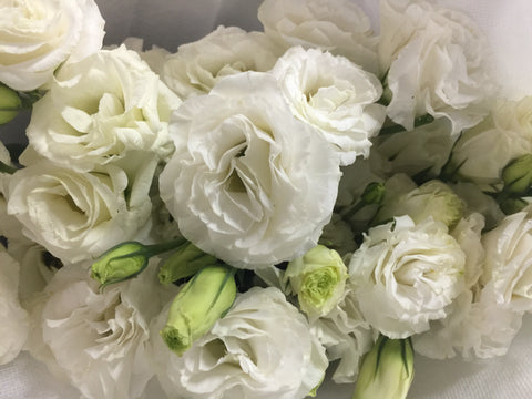 Fresh Cut Eustoma - DIY4211