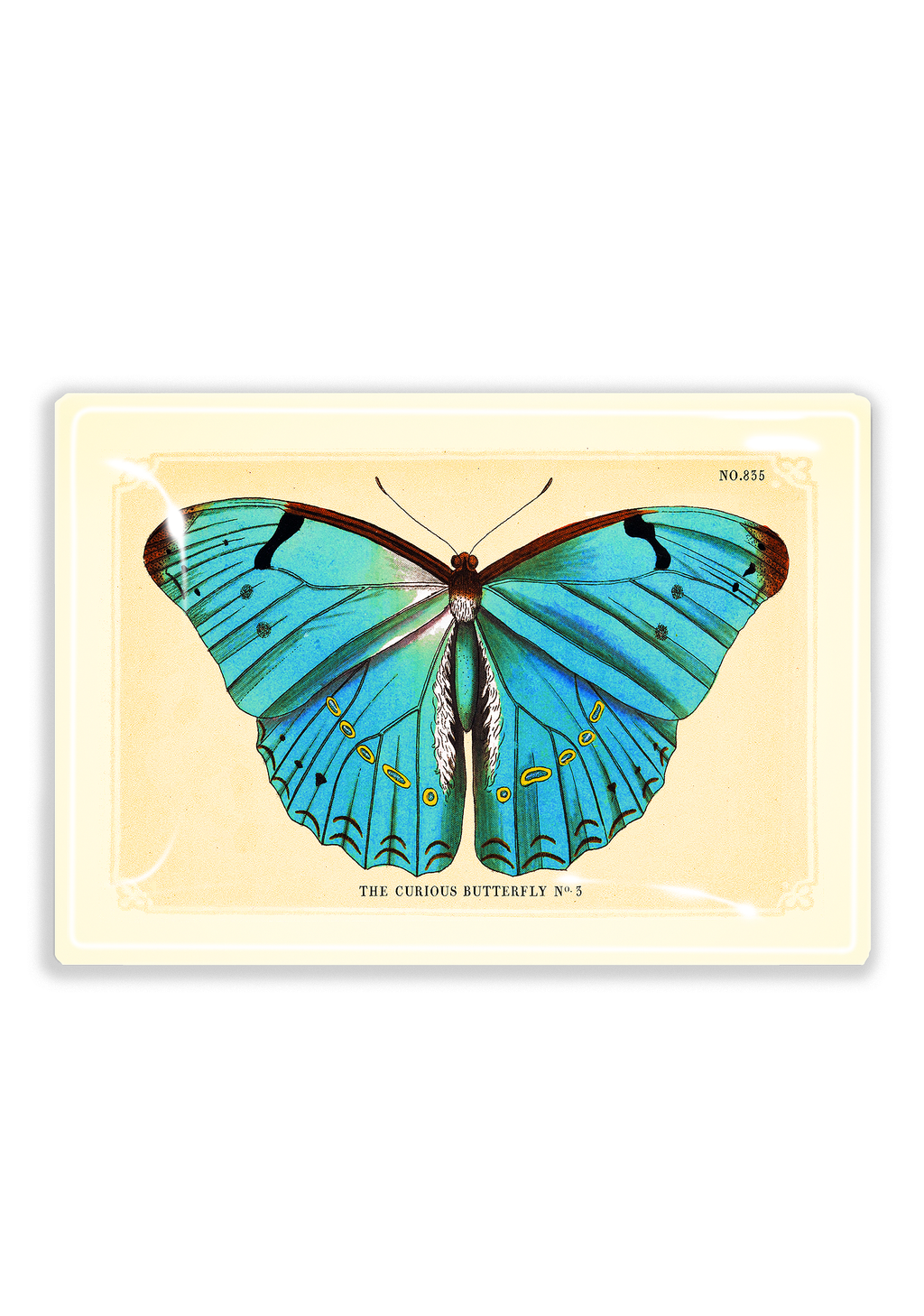 Turquoise Blue Curious Butterfly Decoupage Glass Tray