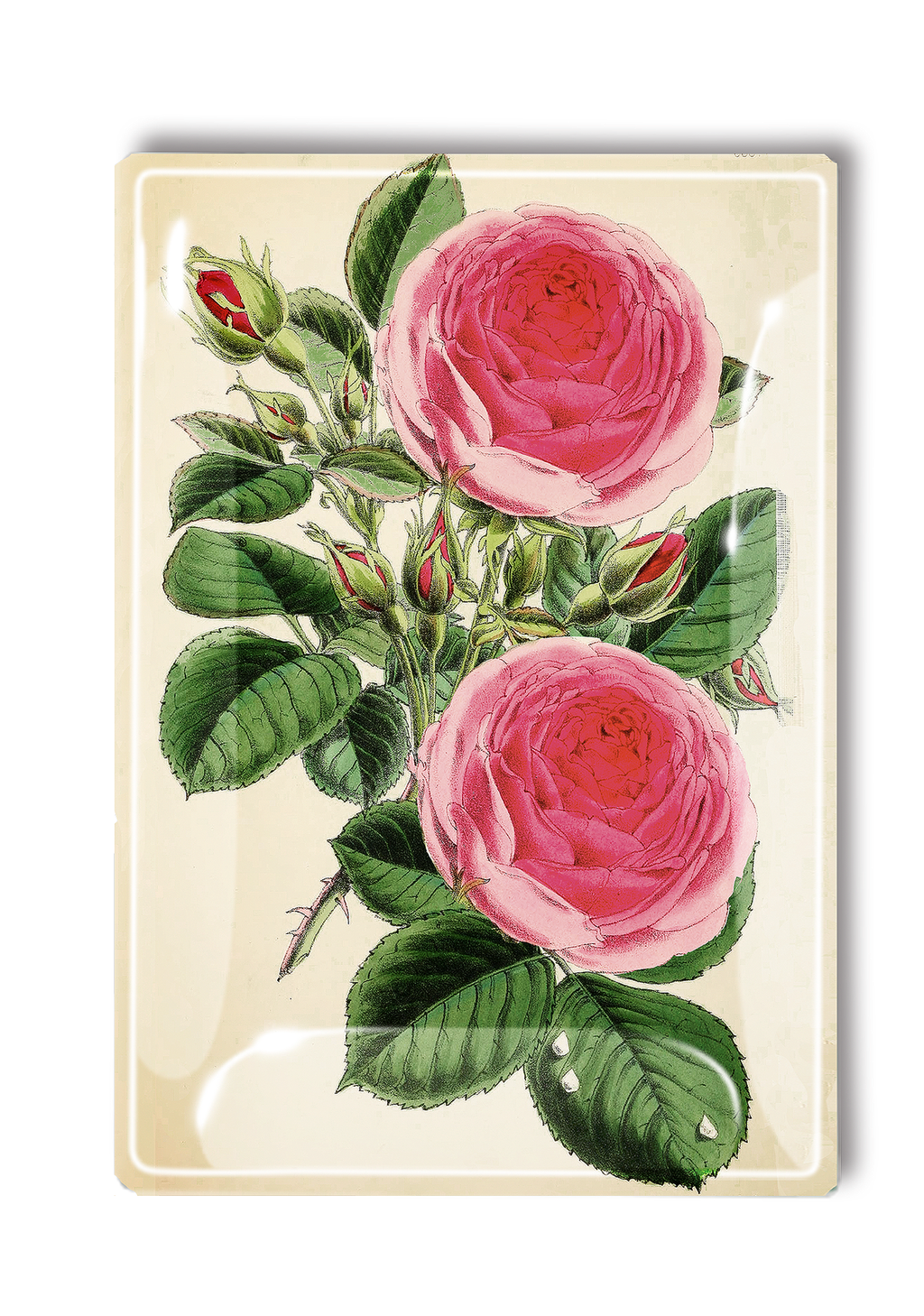 Middleton Pink Rose Decoupage Glass Tray
