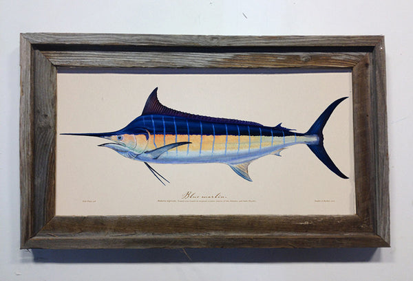 Blue marlin studio abachar for Fish plates near me