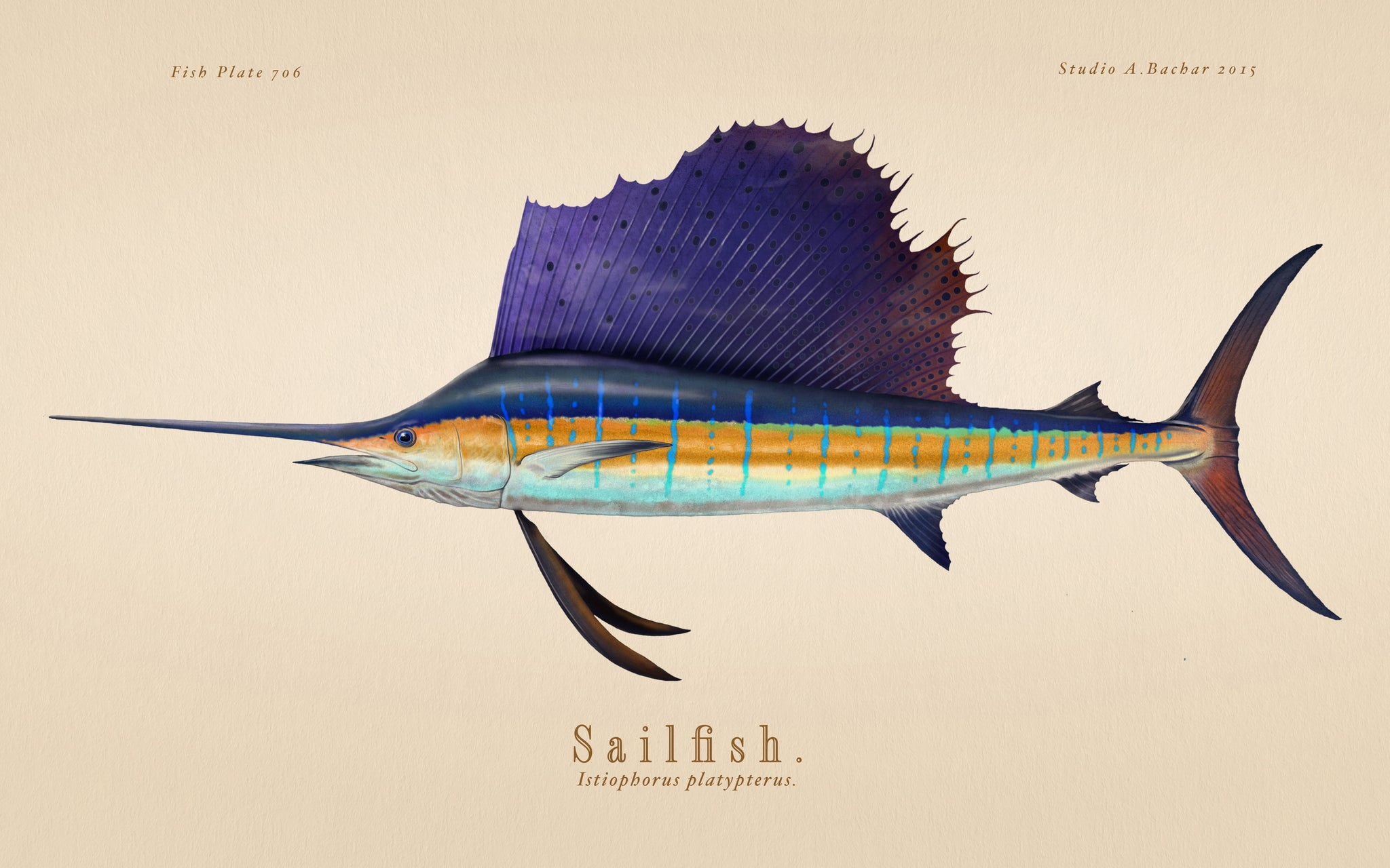 Sailfish 706