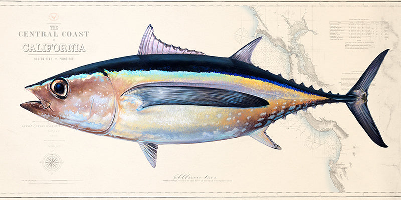 Albacore over charts