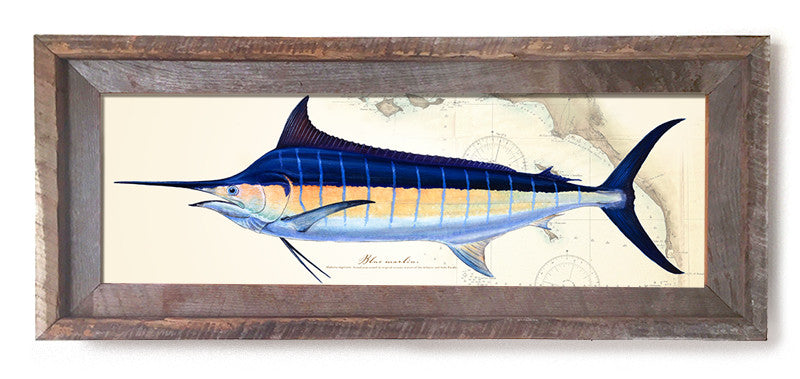 Blue Marlin Over Charts