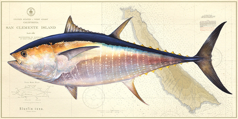 Bluefin Over Chart