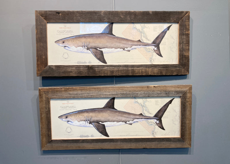 Great white RED TRIANGLE 8x24 wide framed (SP)