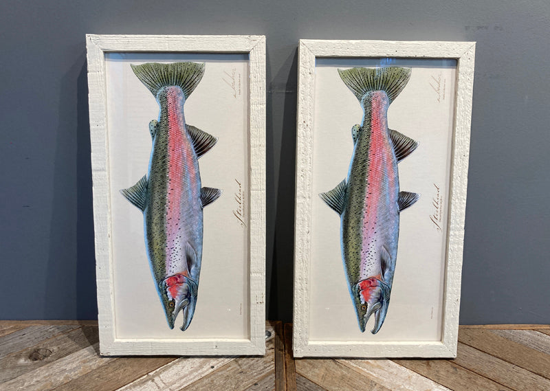 Steelhead 8x16 in gallery (SP)