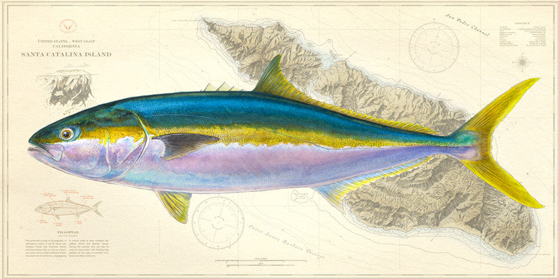 Yellowtail Over Charts