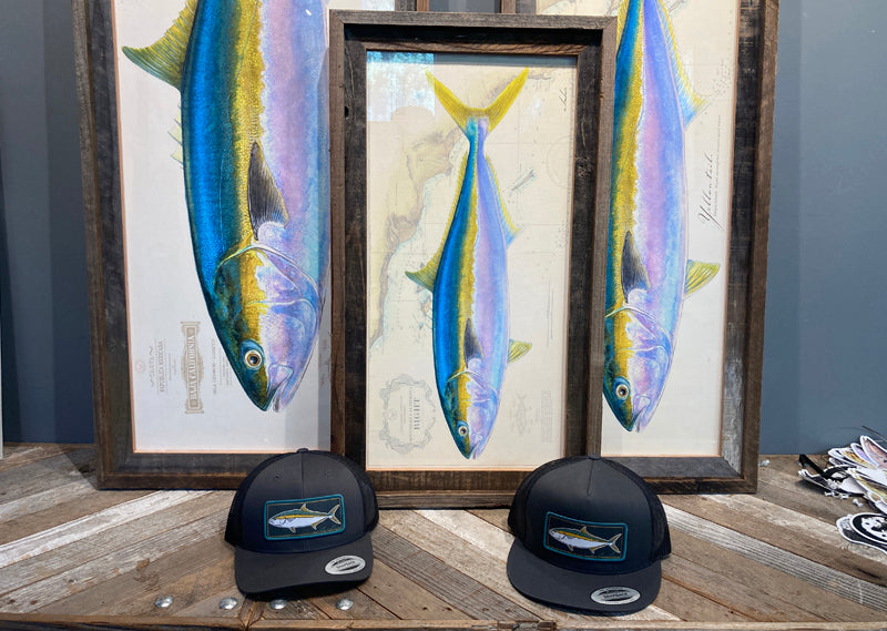 Yellowtail extra stock multiple sizes (SP)