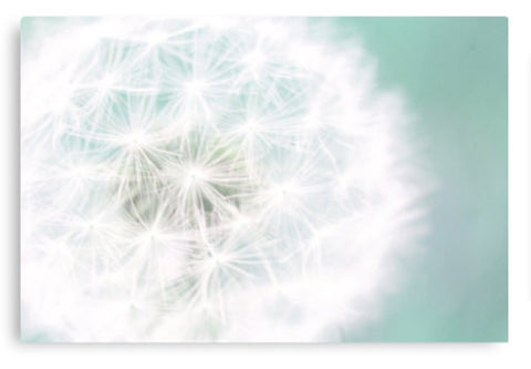 Dandelion Gallery Wrapped Canvas, Ready to Hang