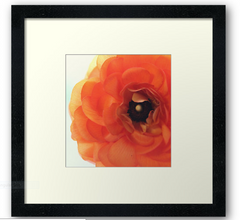 Orange Ranunculus Photography Print