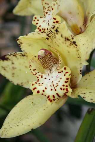 Improve orchid blooms