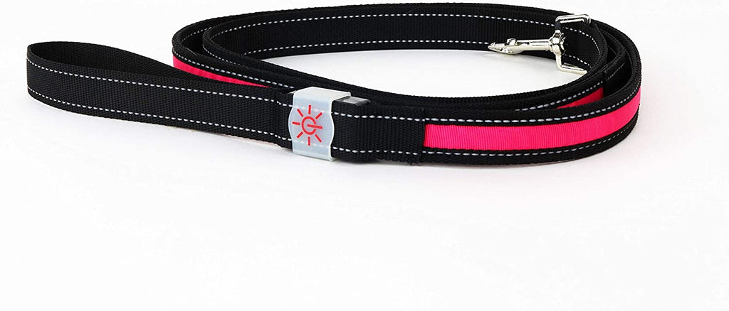 Night Scout Light Up Dog Leash