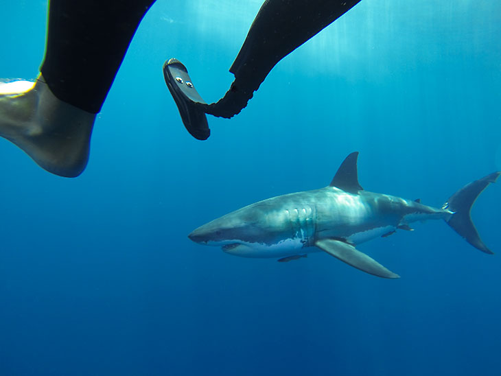 Coots legs and shark