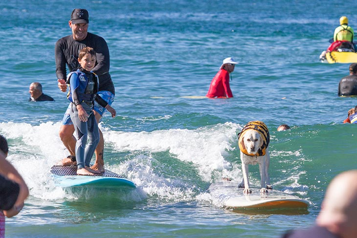 surfing with AWOW