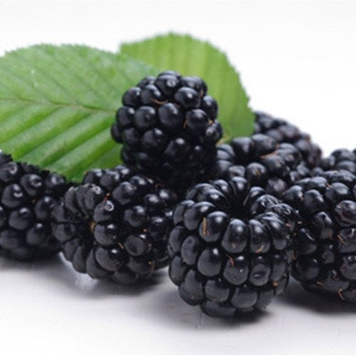 Blackberry by Capella Flavors