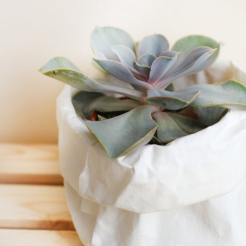 Small Washable Paper Bag
