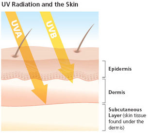 UVA & UVB damaging and skin cancer causing rays