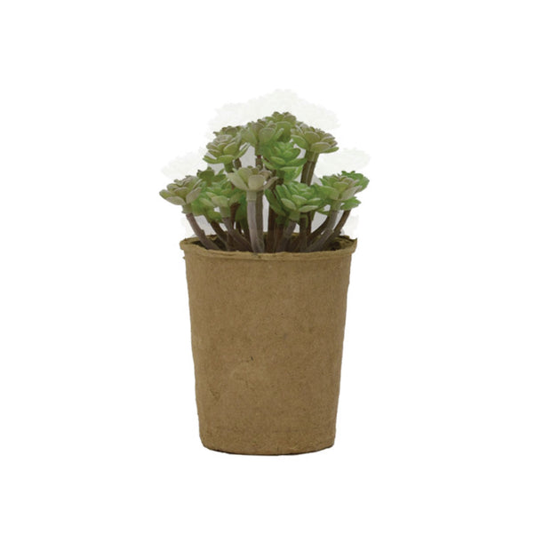 Succulent in Paper Pot