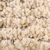 BABYS BREATH WHITE 10PC