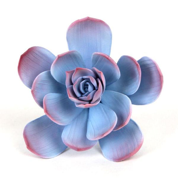 SUCCULENT ESCHEVERIA BLUE ROSE 1PC