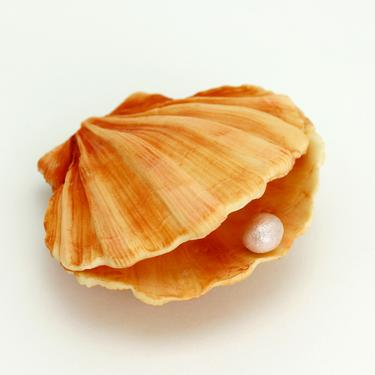 MOULD CLAM SHELL