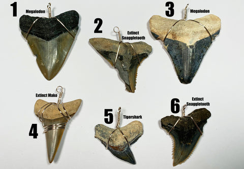 One Of A Kind Shark Teeth | Megalodons (Found By The JoogSquad)