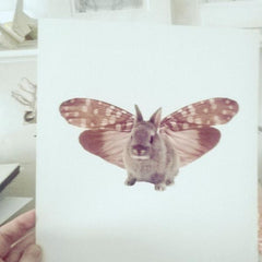 Catalogue Series-BunnyMoth Print
