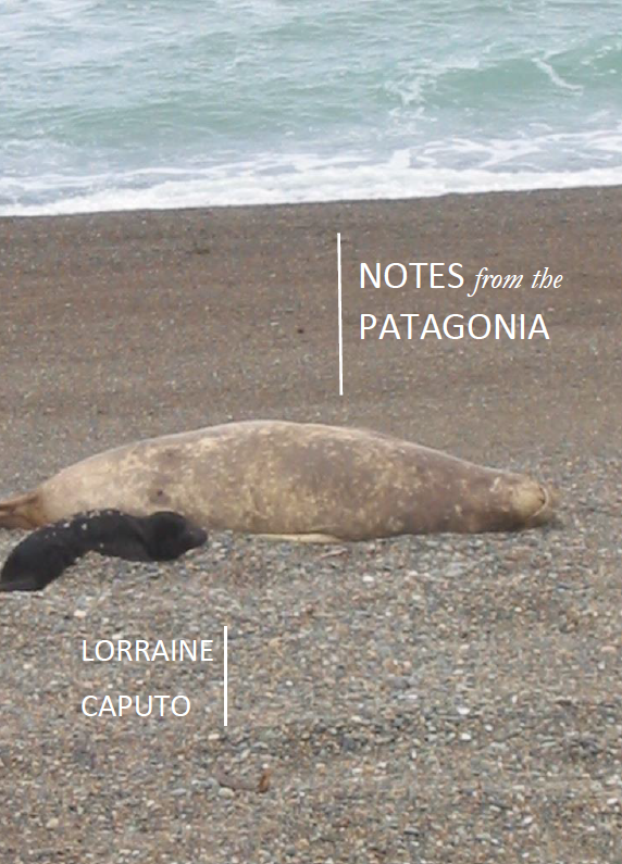 Notes from the Patagonia | Lorraine Caputo