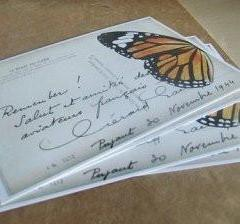 postcards / set of 5 / monarch
