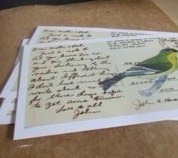 postcards / set of 5 / finch