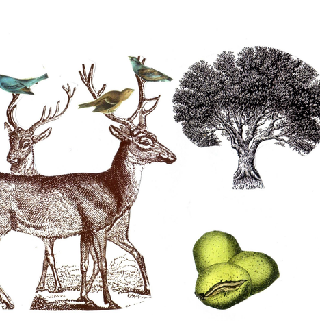 strange seed collage print: deers & birds