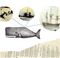 shipreck series collage print: whale