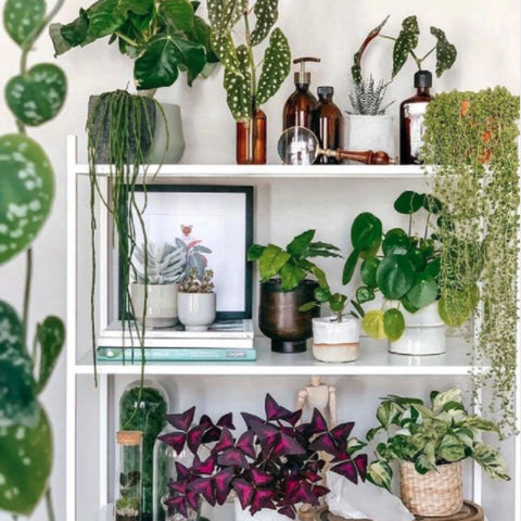 Dad-Gift-Ideas-Office-Plants